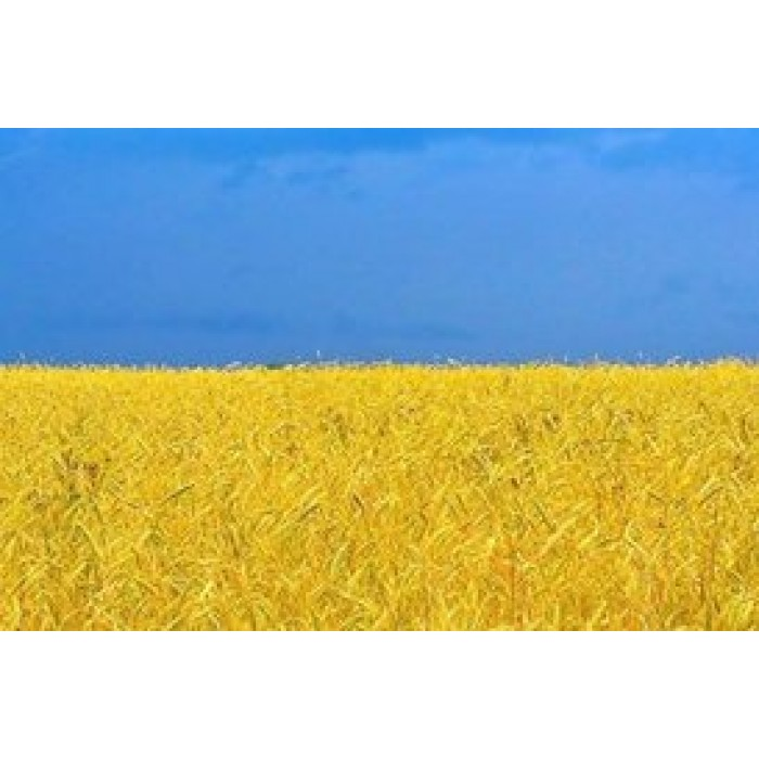 Символика желто-голубого цвета и европейского флага.